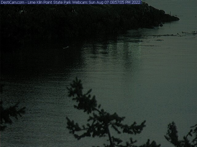 Lime Kiln Point State Park Webcam